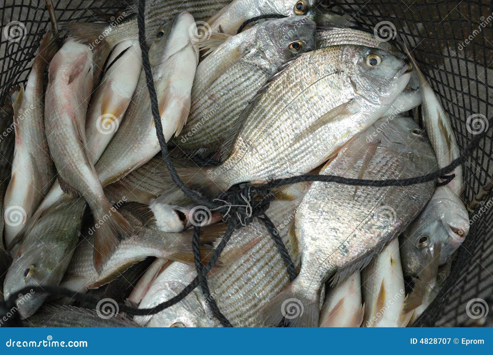 Fische im Fishnet