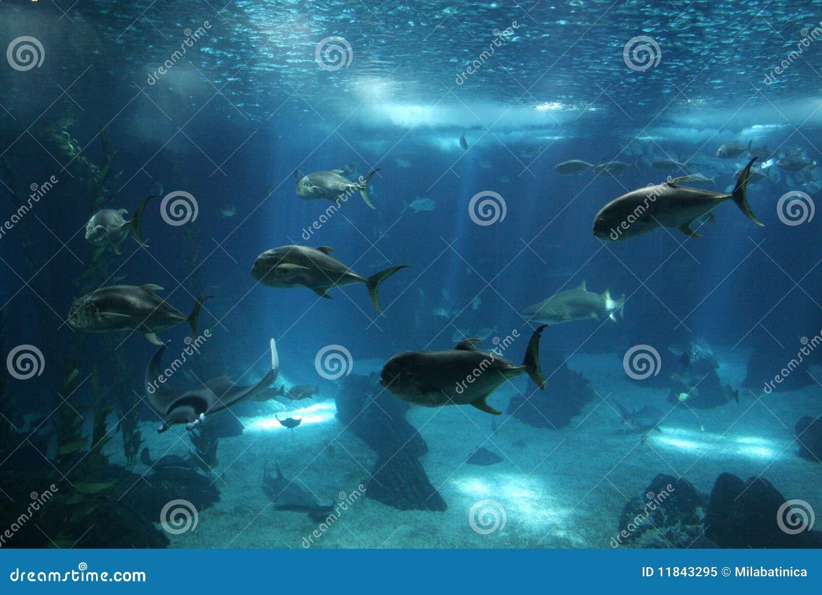 Fische in Lissabon Oceanarium