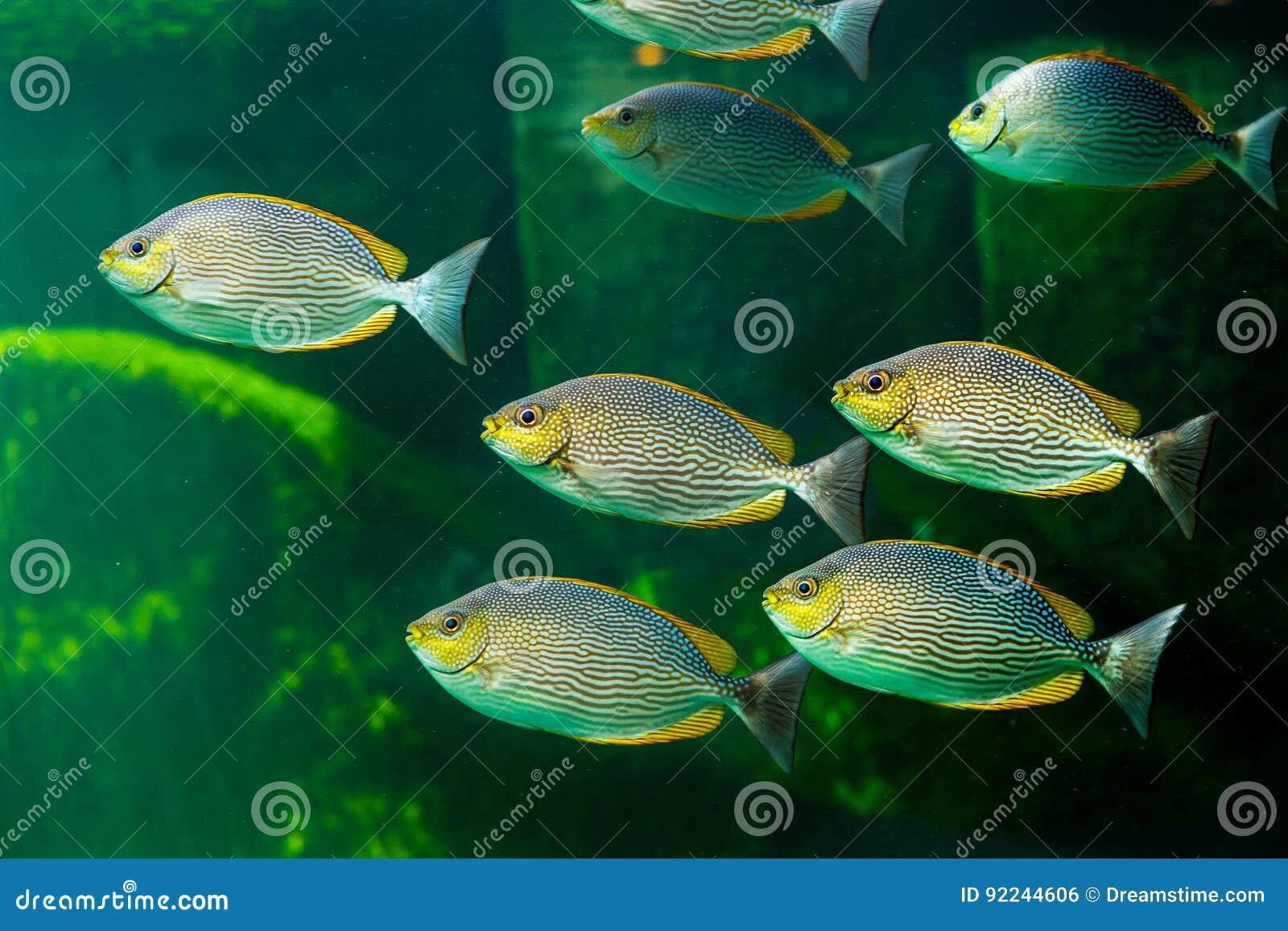 fische mit den korallenroten und wassertieren stockfoto