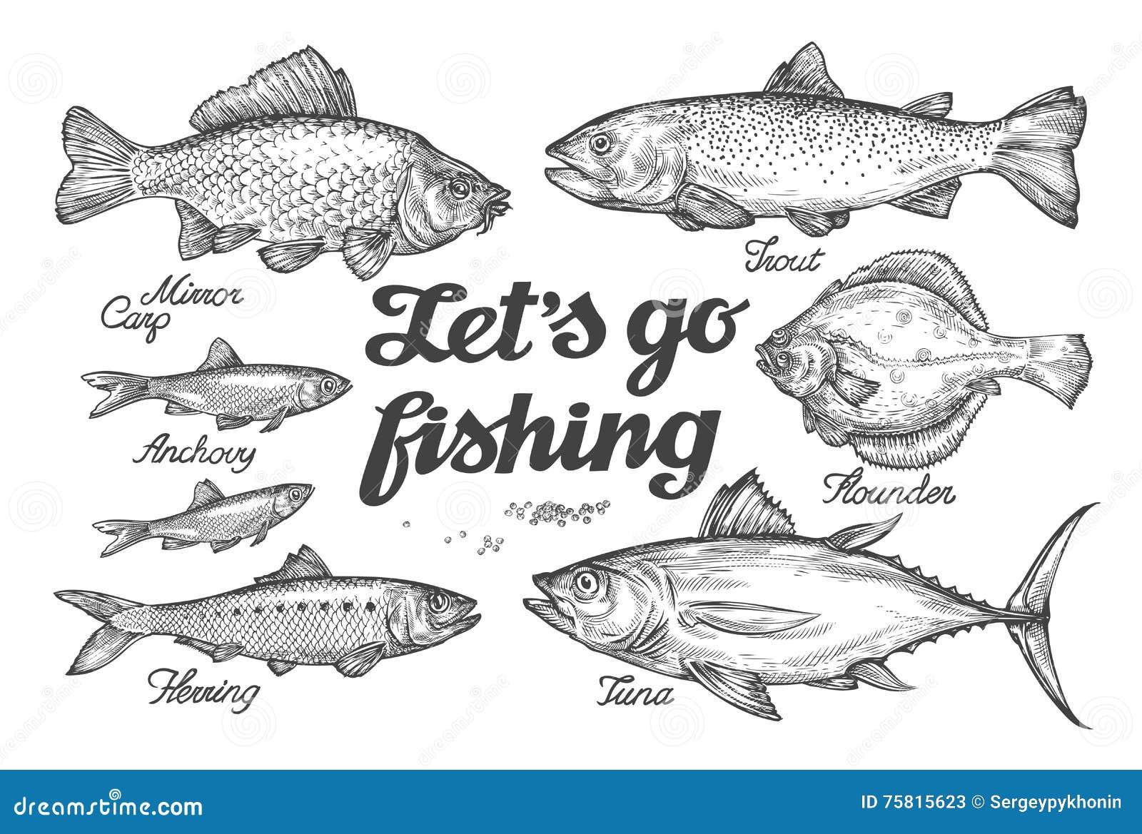 Fischen Hand gezeichnete Vektorfische Skizzieren Sie Forelle, Karpfen, Thunfisch, Hering, Scholle, Sardelle