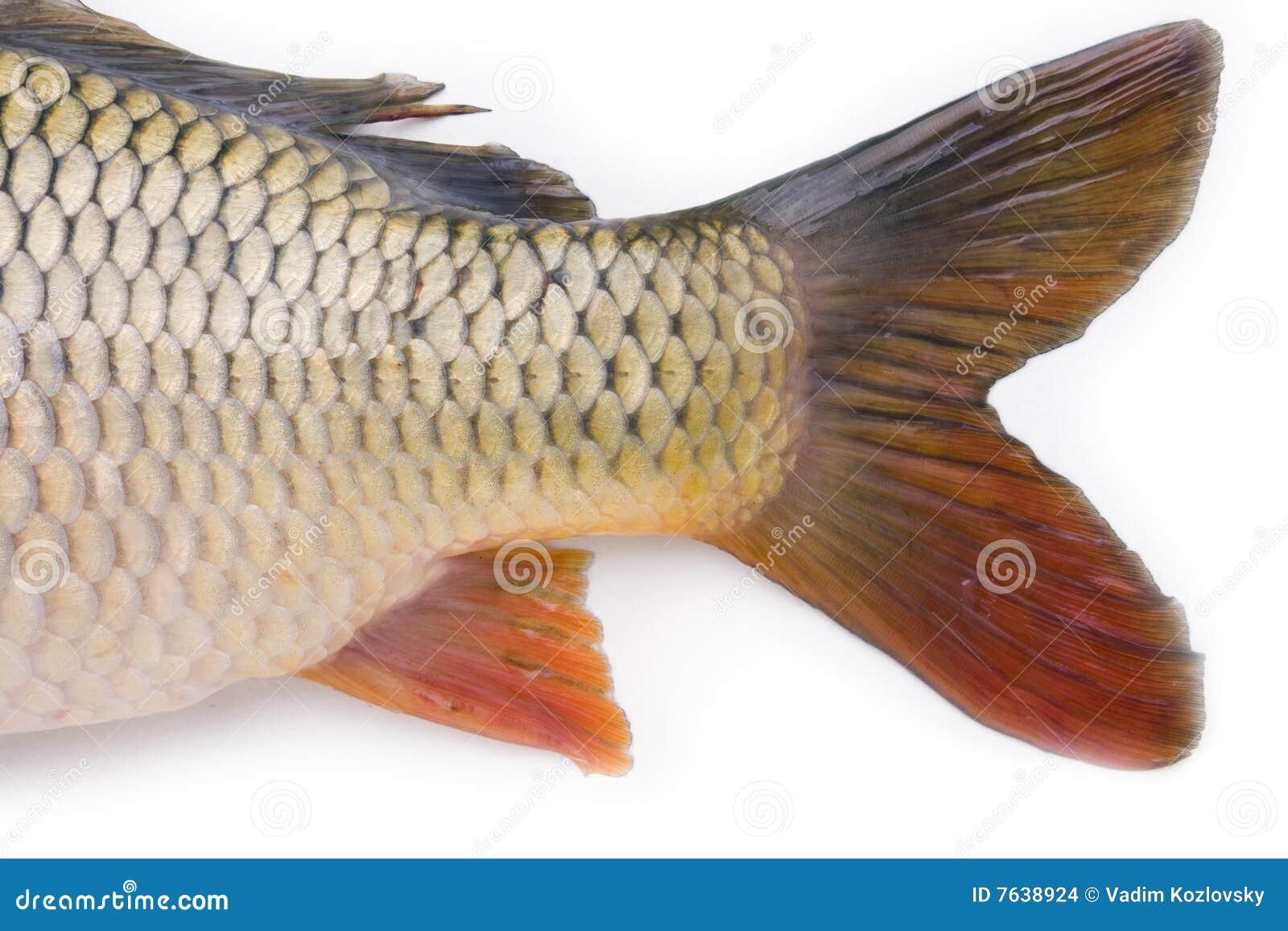 Fischen Sie Ansammlung