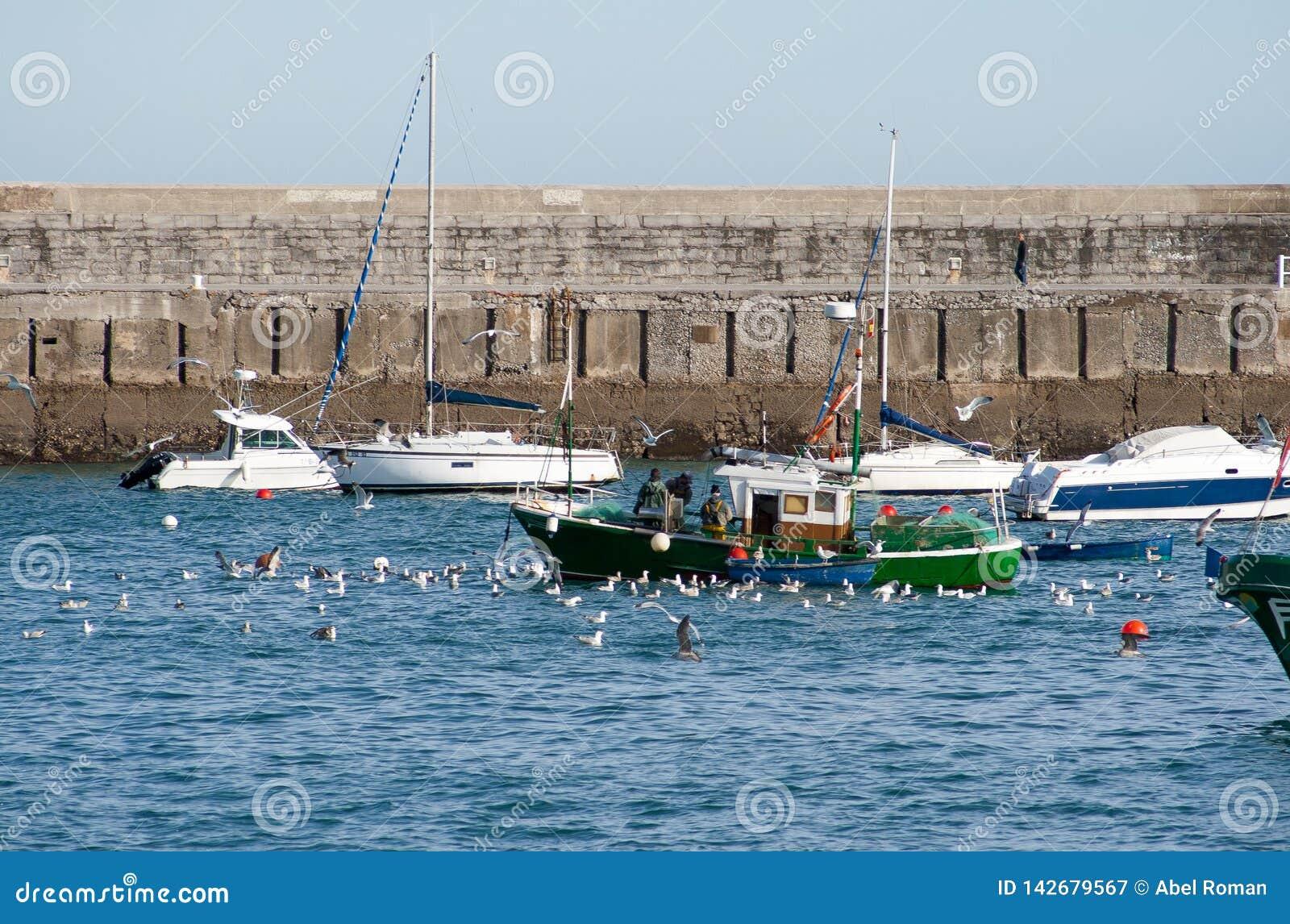 Fischer und Seemöwen