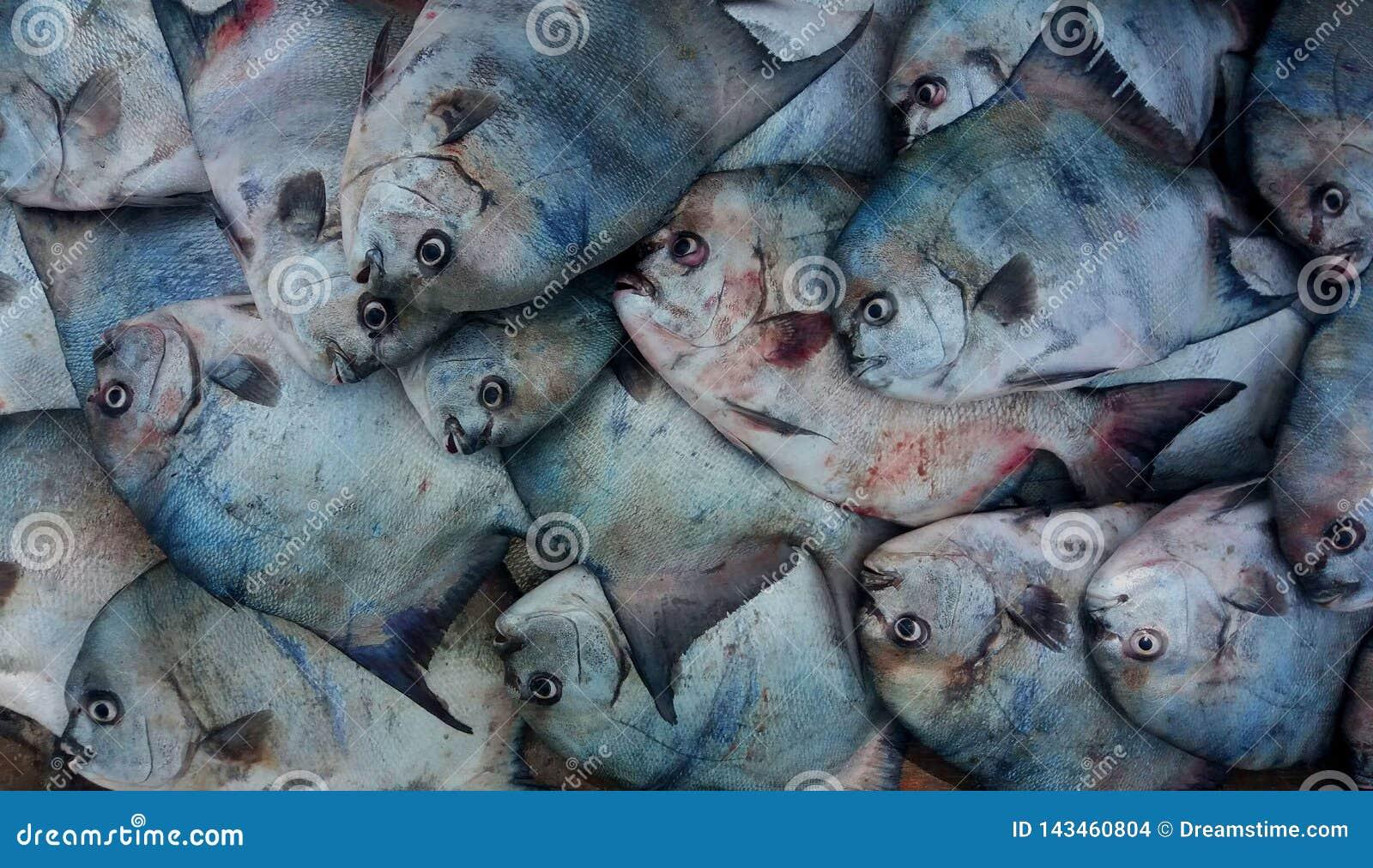 Fischerei im Atlantik