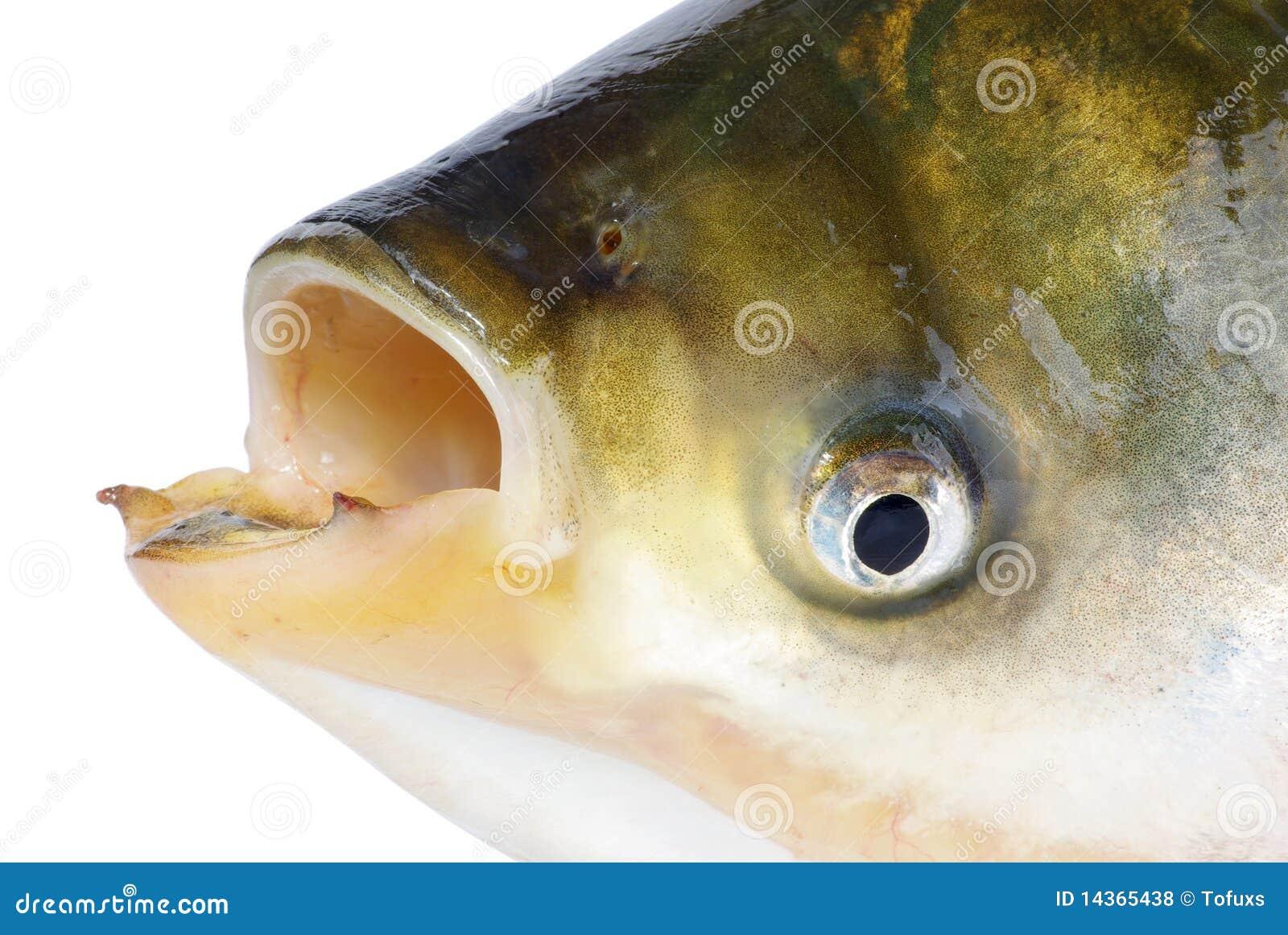 Fischkopf Mensch