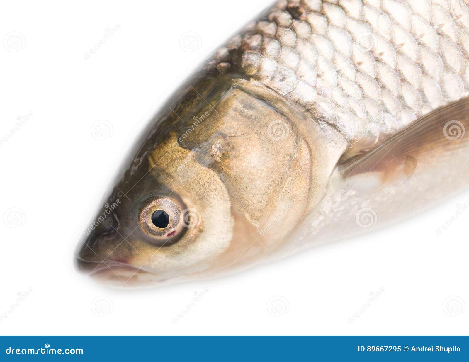 Www.Fischkopf