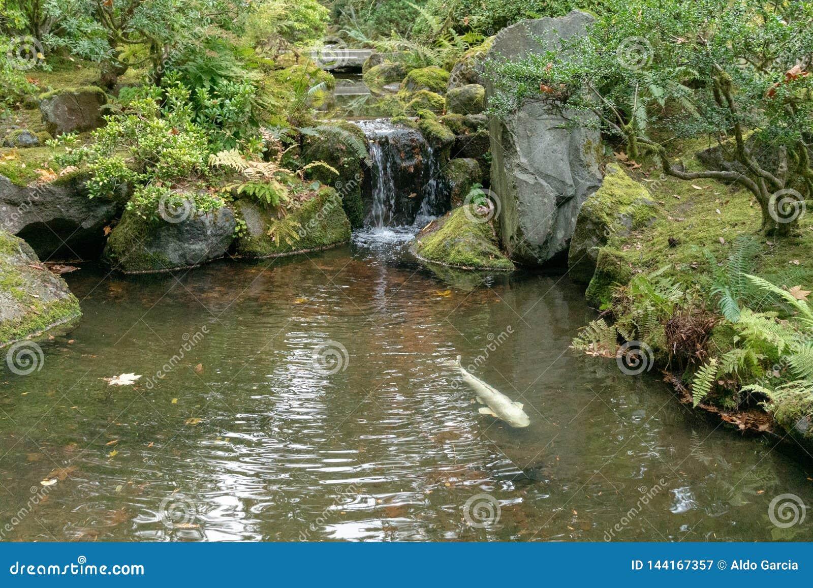 Fischteich und -brunnen am japanischen Teegarten