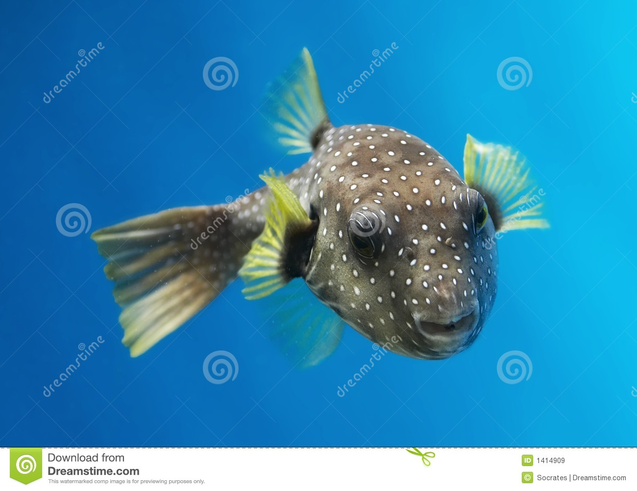 Fish Royalty Free Stock Images Image 1414909