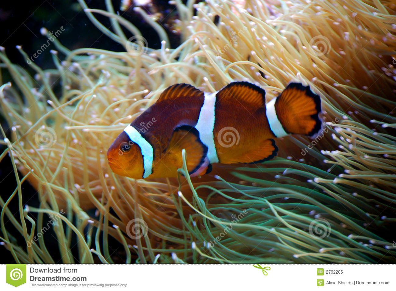 Fish royalty free stock photo image 2792285 for Dream of fish swimming