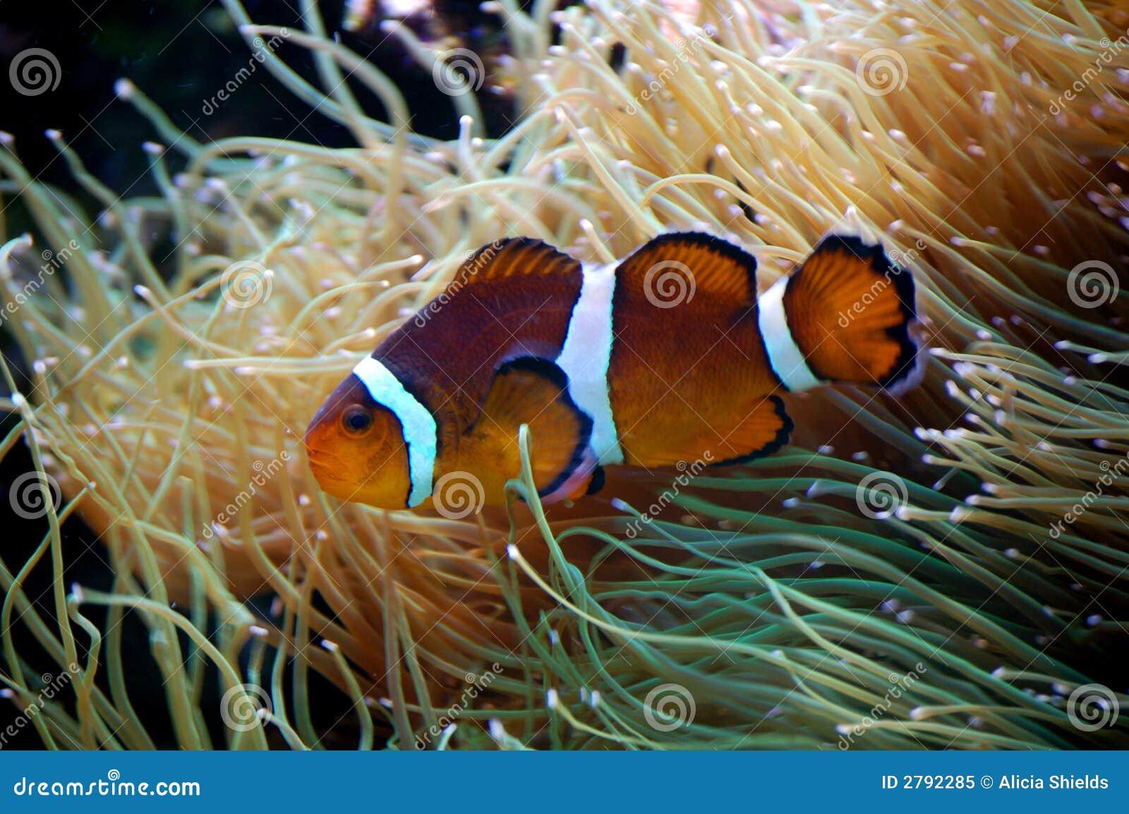 Fish Royalty Free Stock Photo Image 2792285