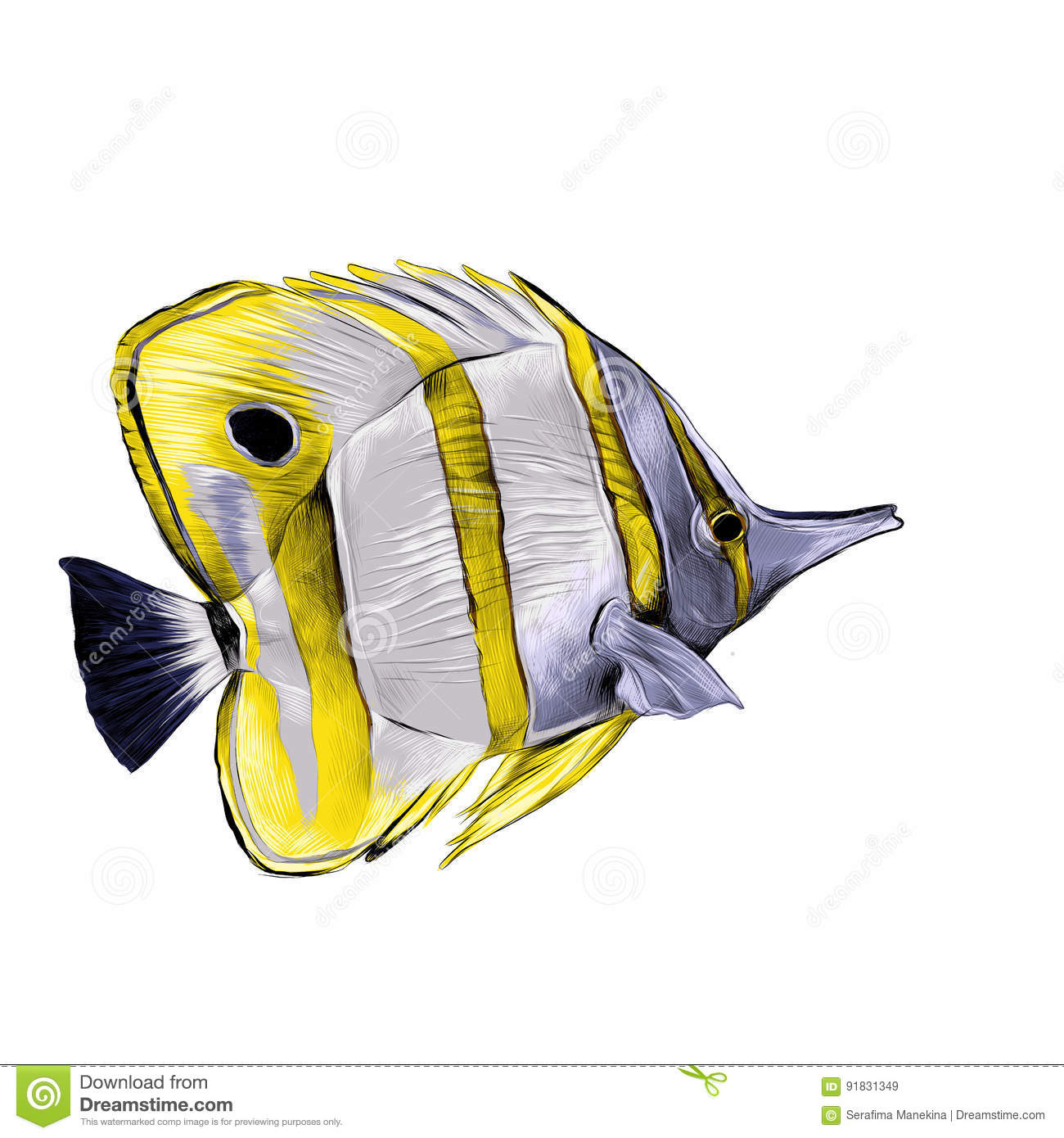 Fancy Picture Of A Fish To Color Pattern
