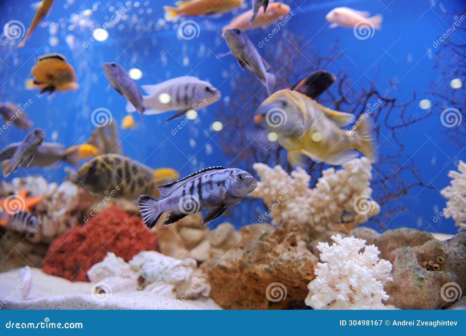 Fish In Aquarium Royalty Free Stock Photography Image