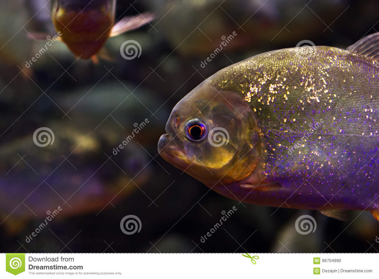 Fish in aquarium stock photo image 66704990 for How many fish are in the world