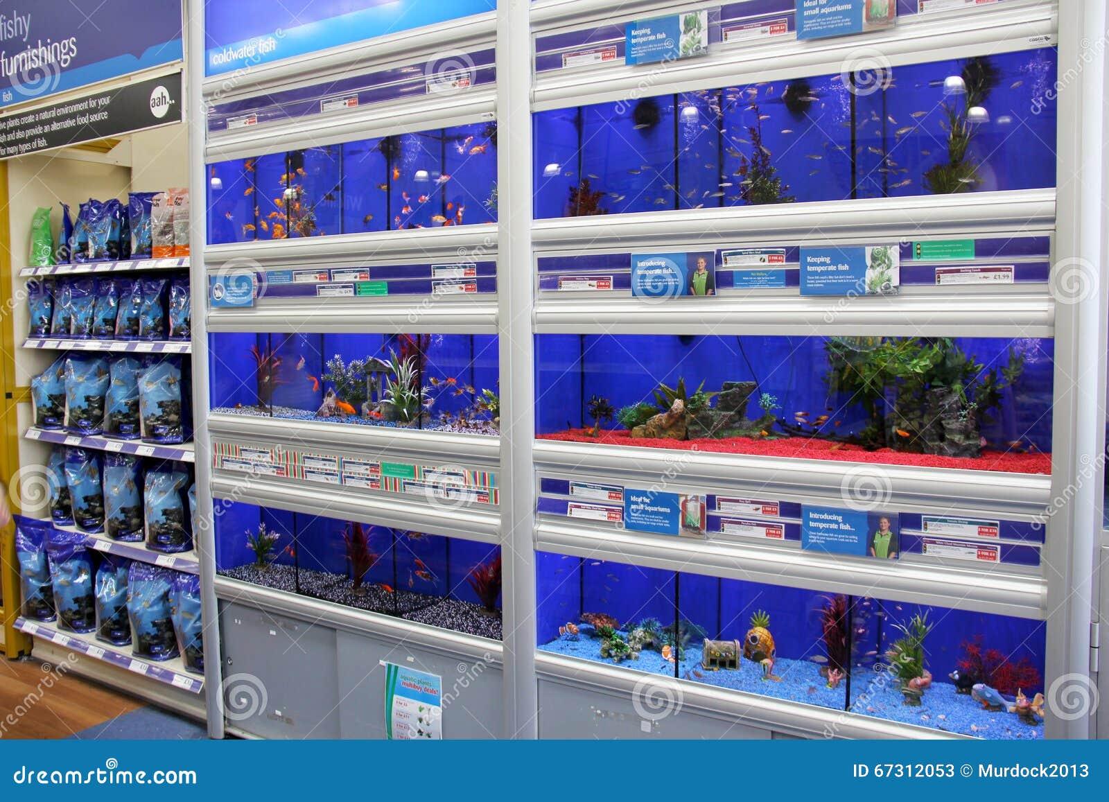 Aquarium fish tank for sale in london - Fish In Aquariums Editorial Stock Photo