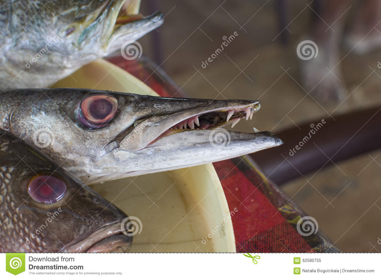 Fish A Barracuda With Teeth Stock Photo - Image: 62580755
