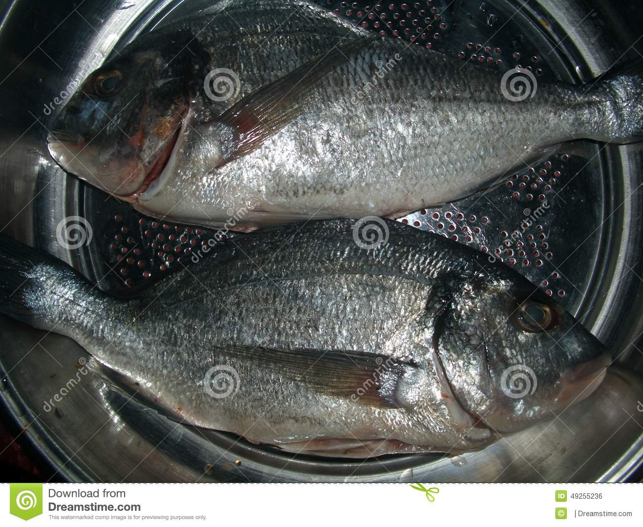 Fish stock photo image 49255236 for Places that sell fish near me
