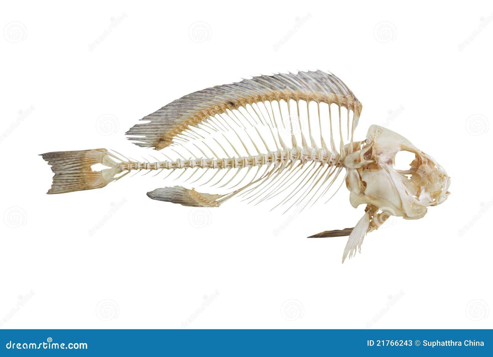 Fish Bone Stock Photos - Image: 21766243