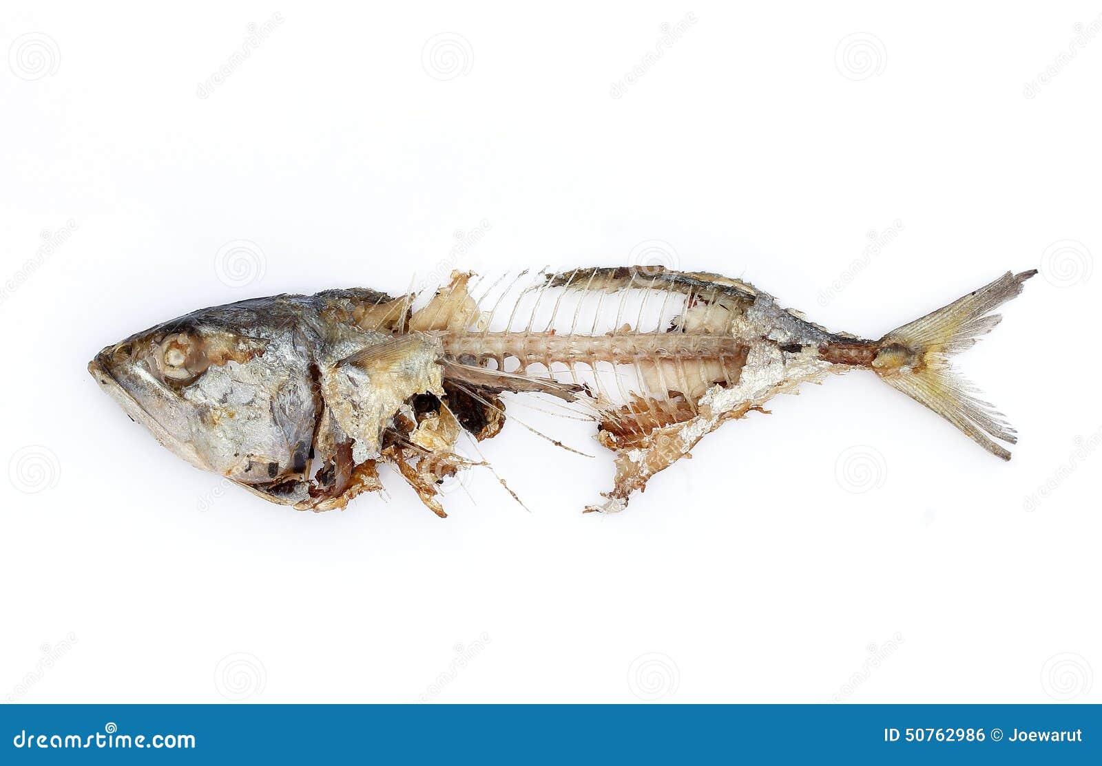 Fish Bone Stock Photo Image 50762986