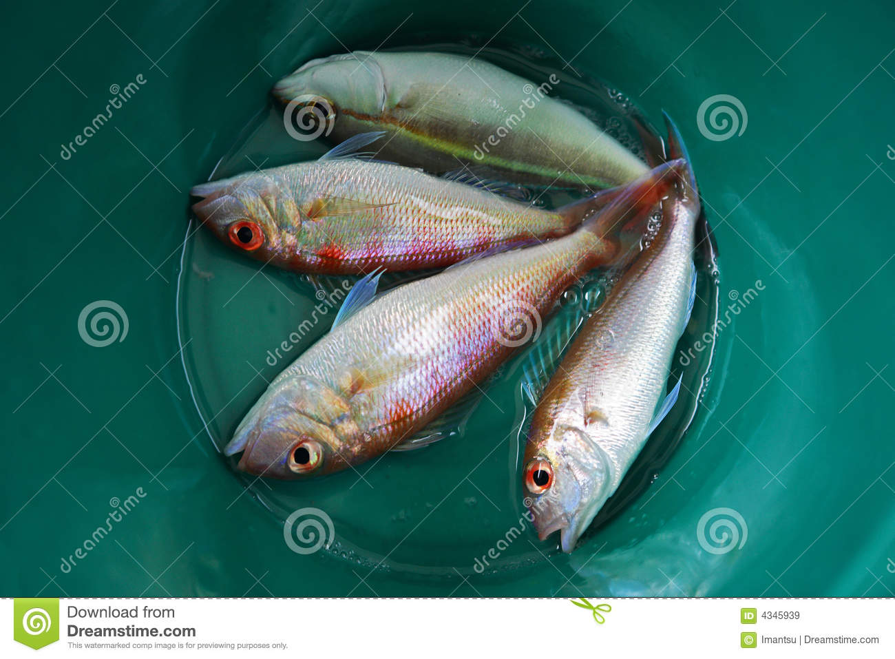 Fish in a bowl royalty free stock images image 4345939 for Fish in a bowl