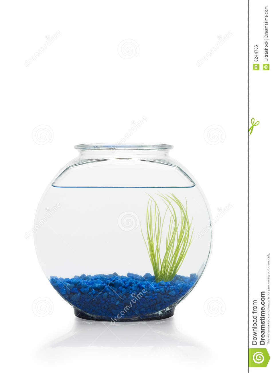 Fish bowl stock image image of blue accessories fish for Fish in a bowl