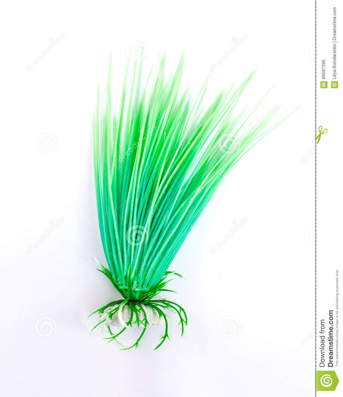 Fish bowl plants on white background stock photo image for Fish bowl plants