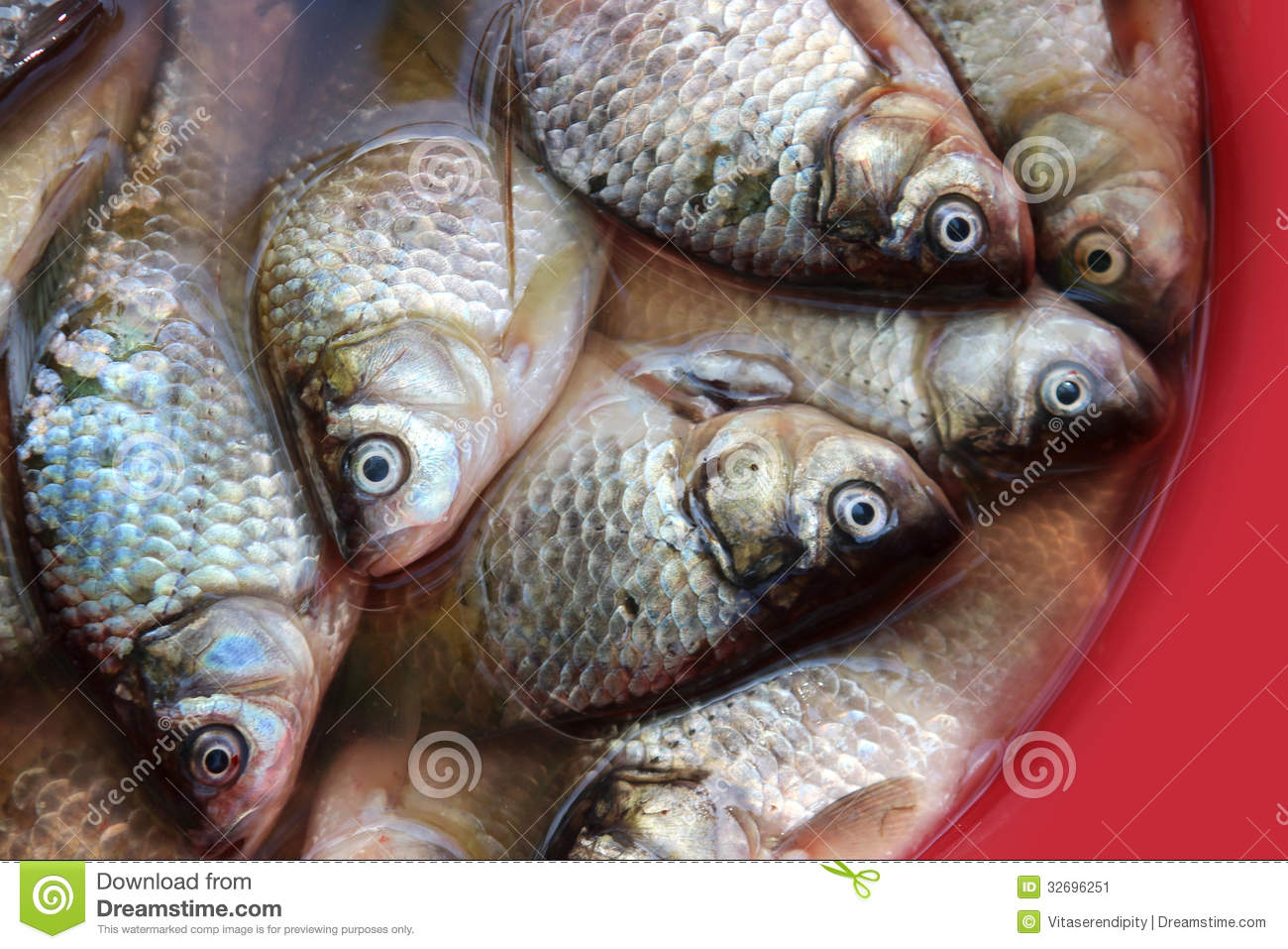 Fish in a bowl stock image image 32696251 for Fish in a bowl