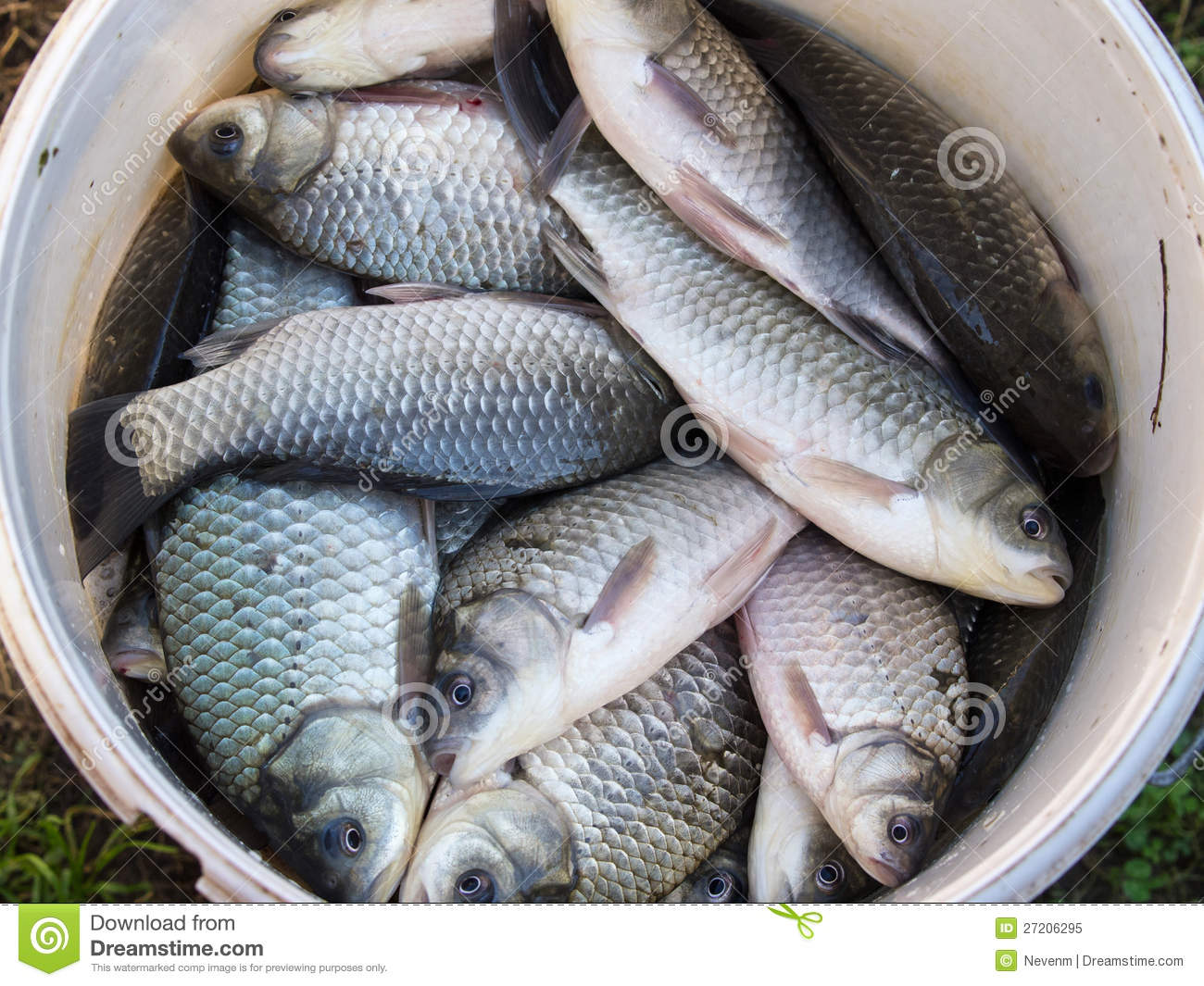Fish in the bucket royalty free stock photo image 27206295 for Bucket of fish