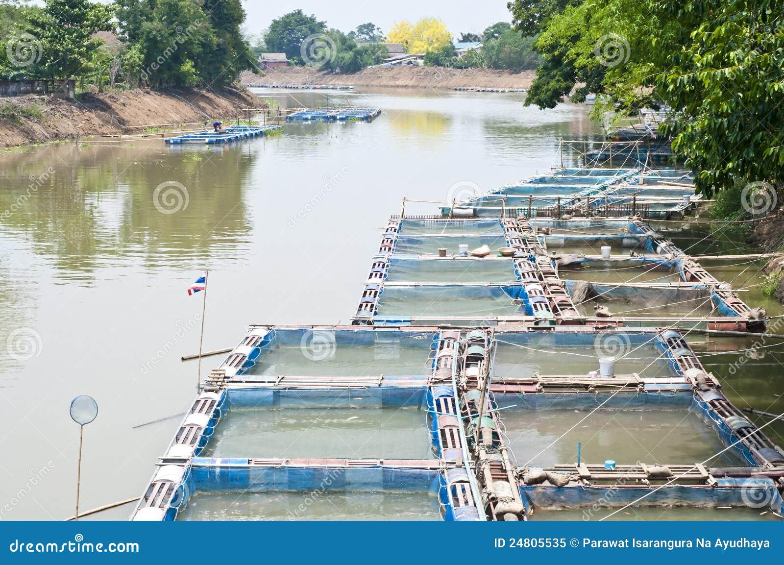 2018 Fish Farming Business Plan/Feasibility Study In Nigeria PDF