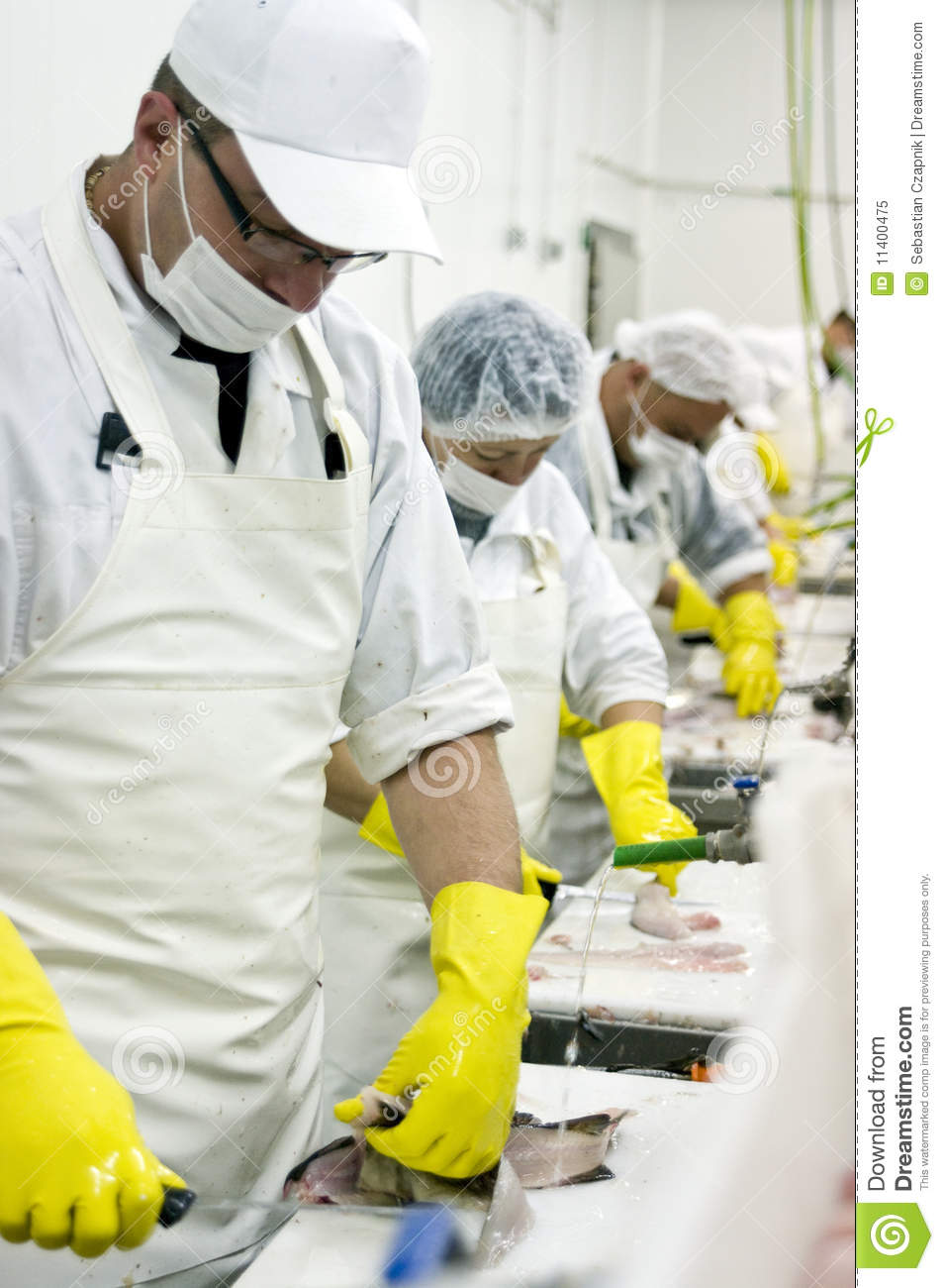 fish cleaning assembly line royalty free stock photo