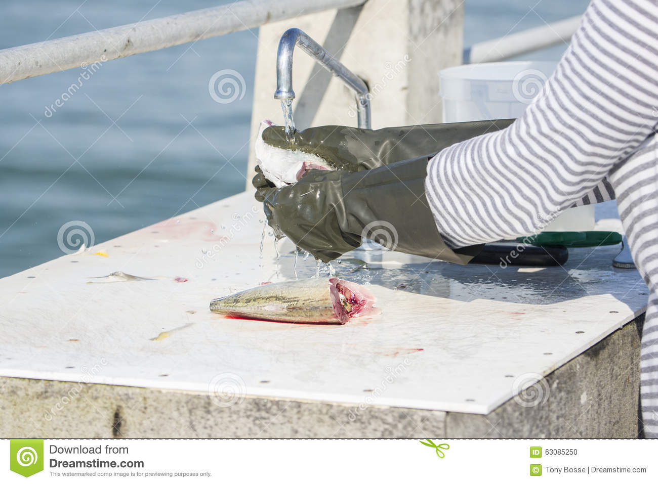 Fish Cleaning And Preparation Stock Photo