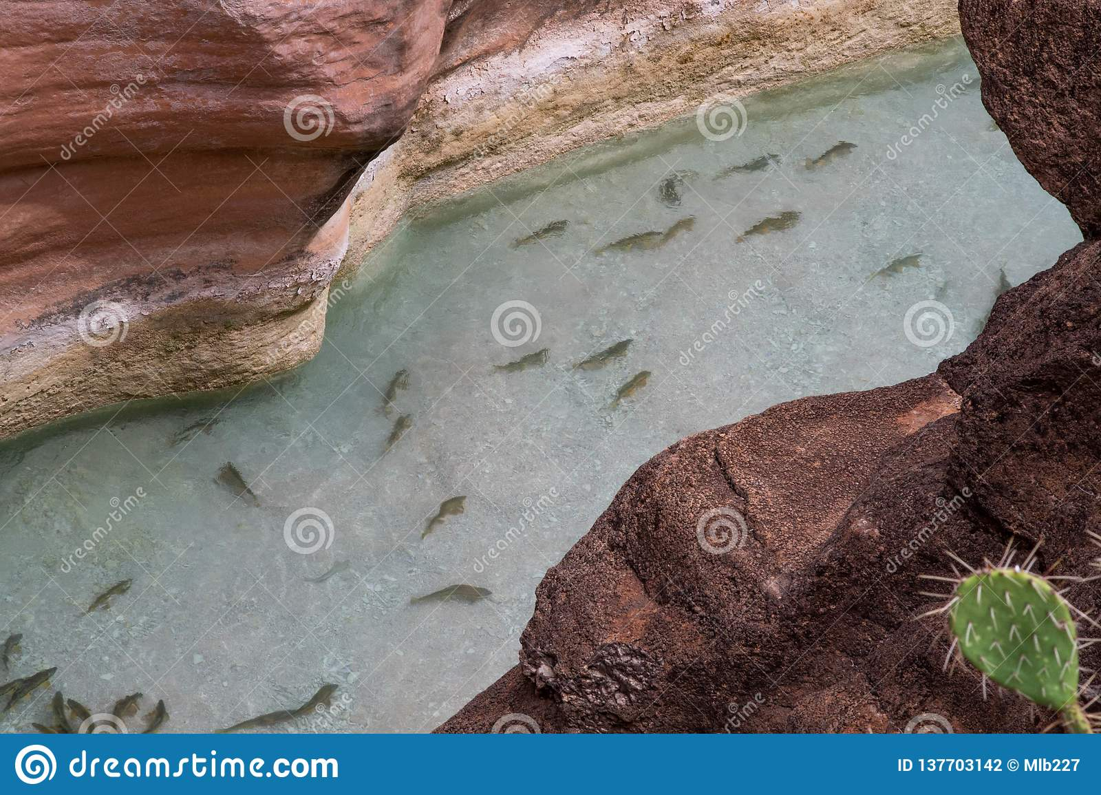 Fish in the clear blue waters of a slot canyon