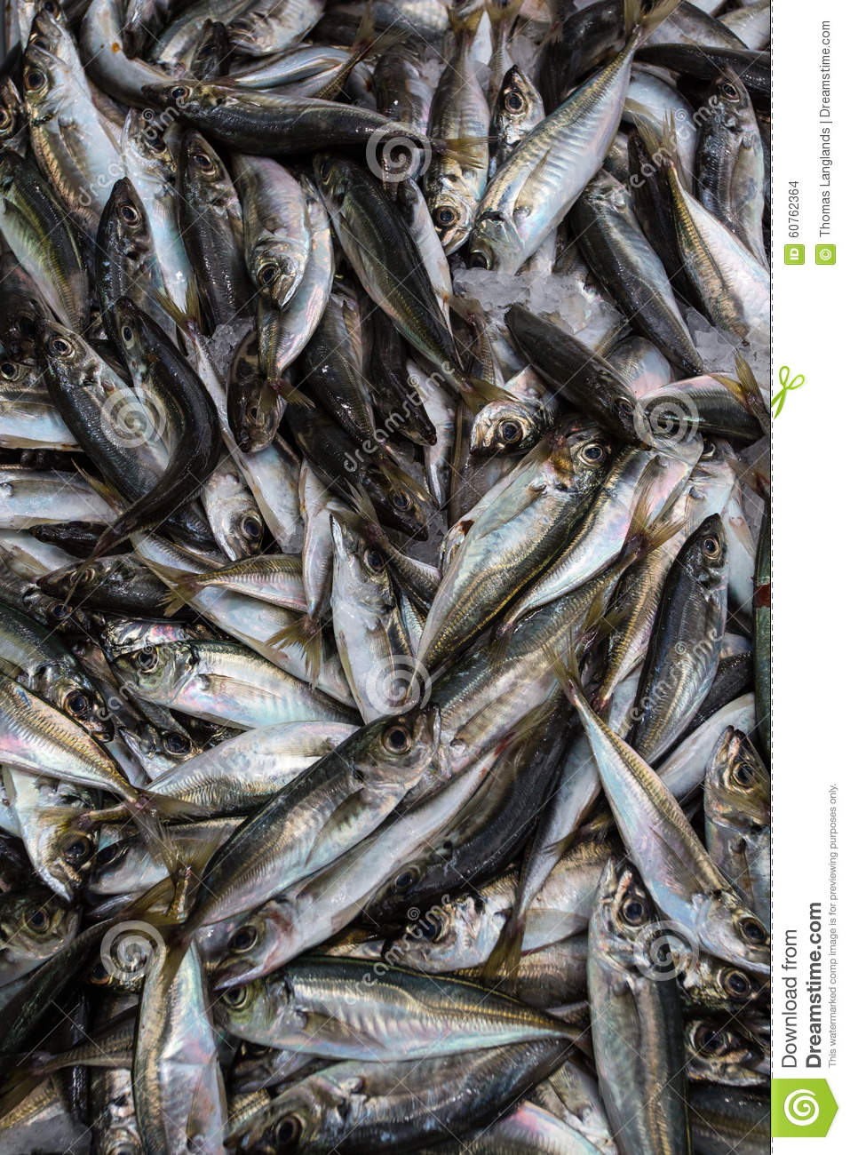 Fish stock photo image 60762364 for Small silver fish