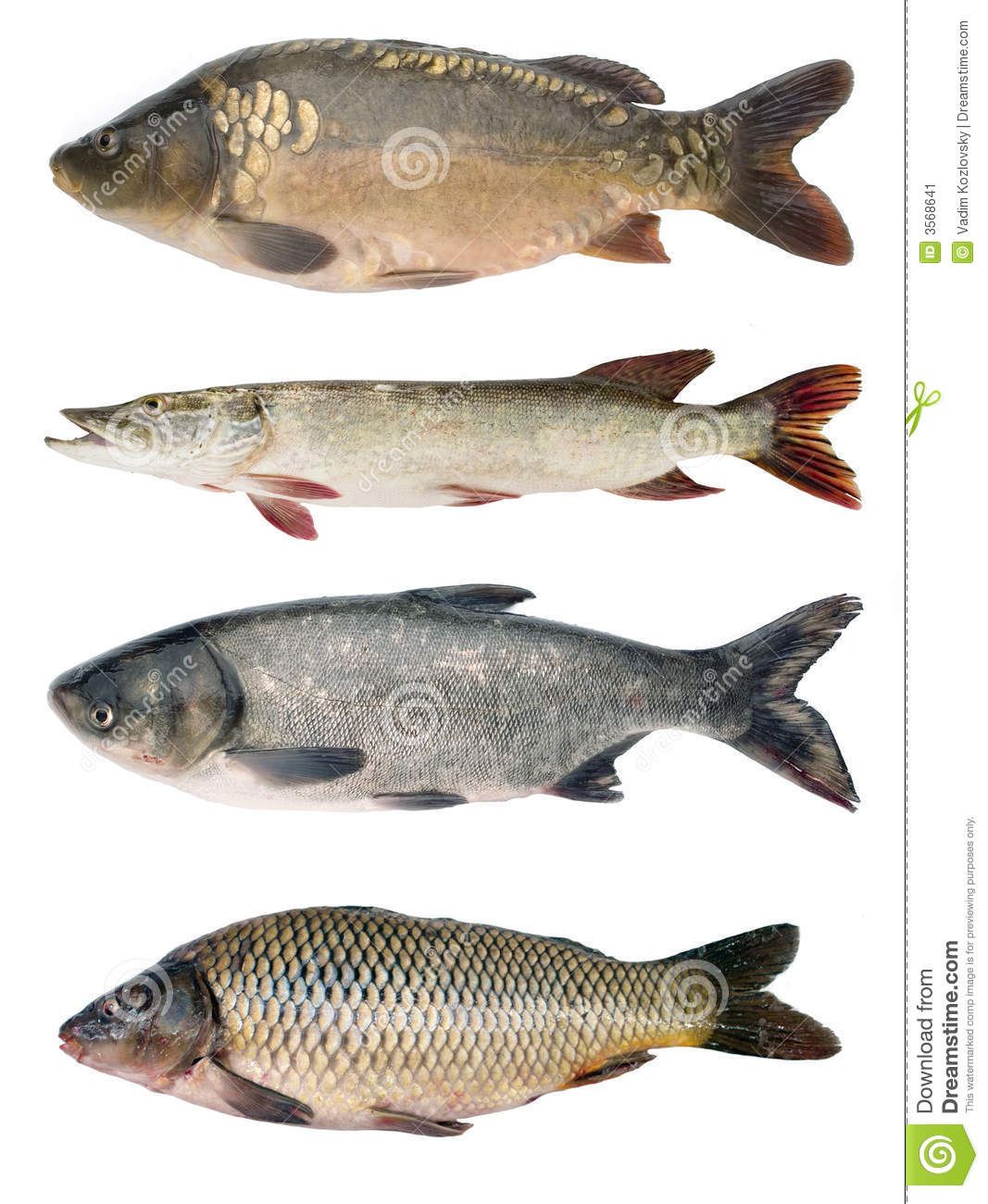 Fish collection stock image image 3568641 for H and m fish count