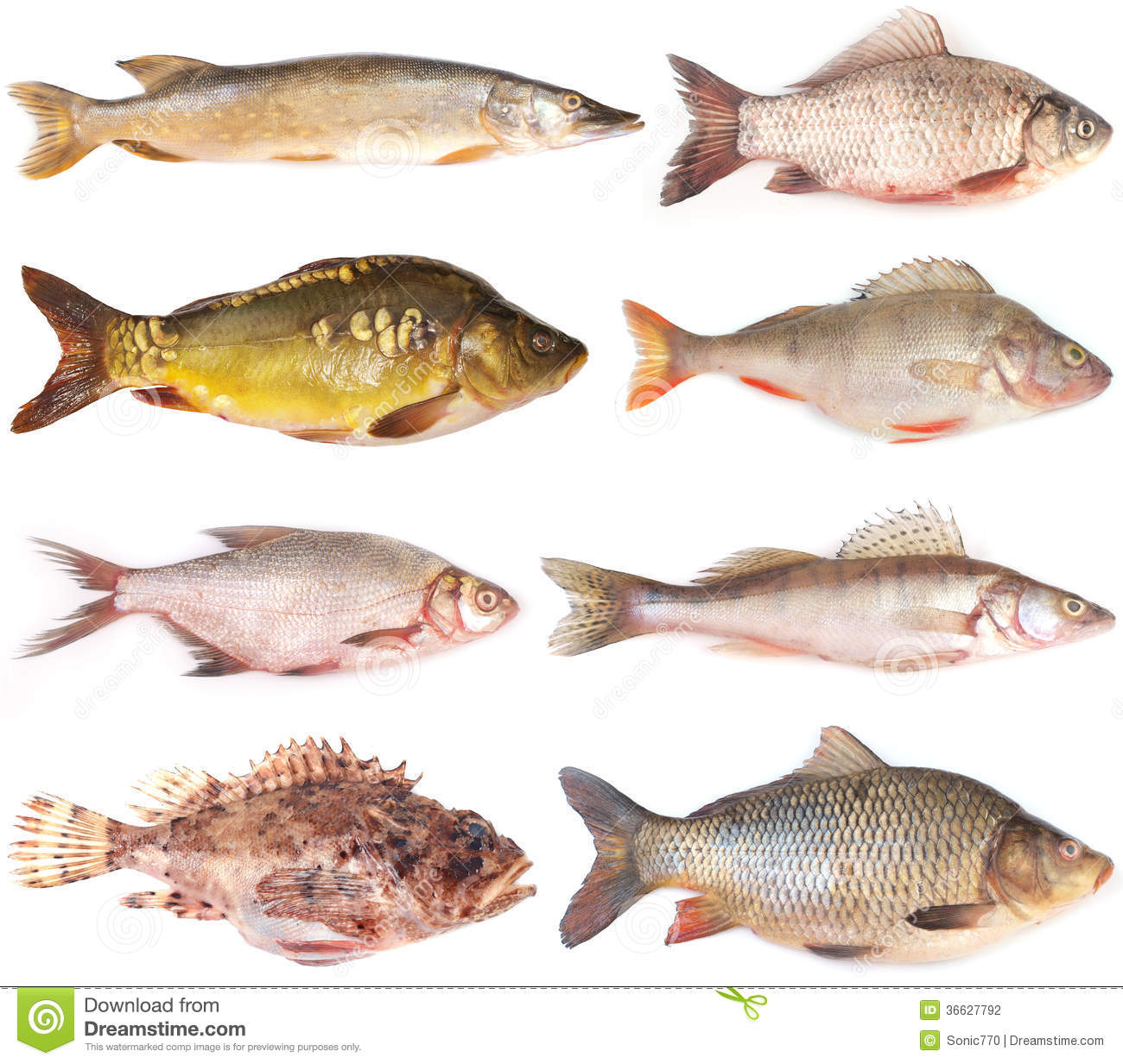 Fish collection stock photography image 36627792 for H and m fish count