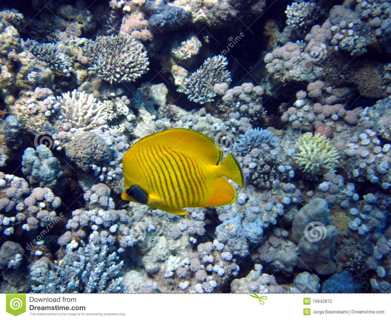 Coral reef fish yellow - photo#22