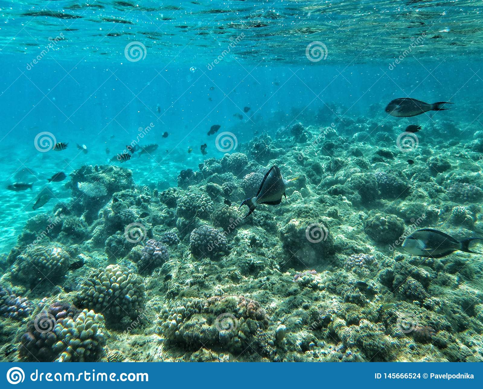 Fish and corals under the sea