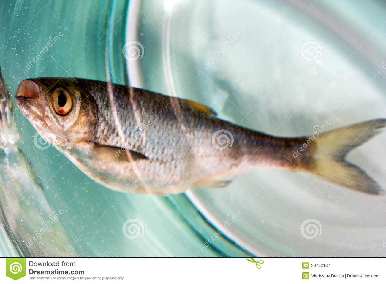 Water pollution the death of animals and fish vector for Pete s fish and chips owner murdered