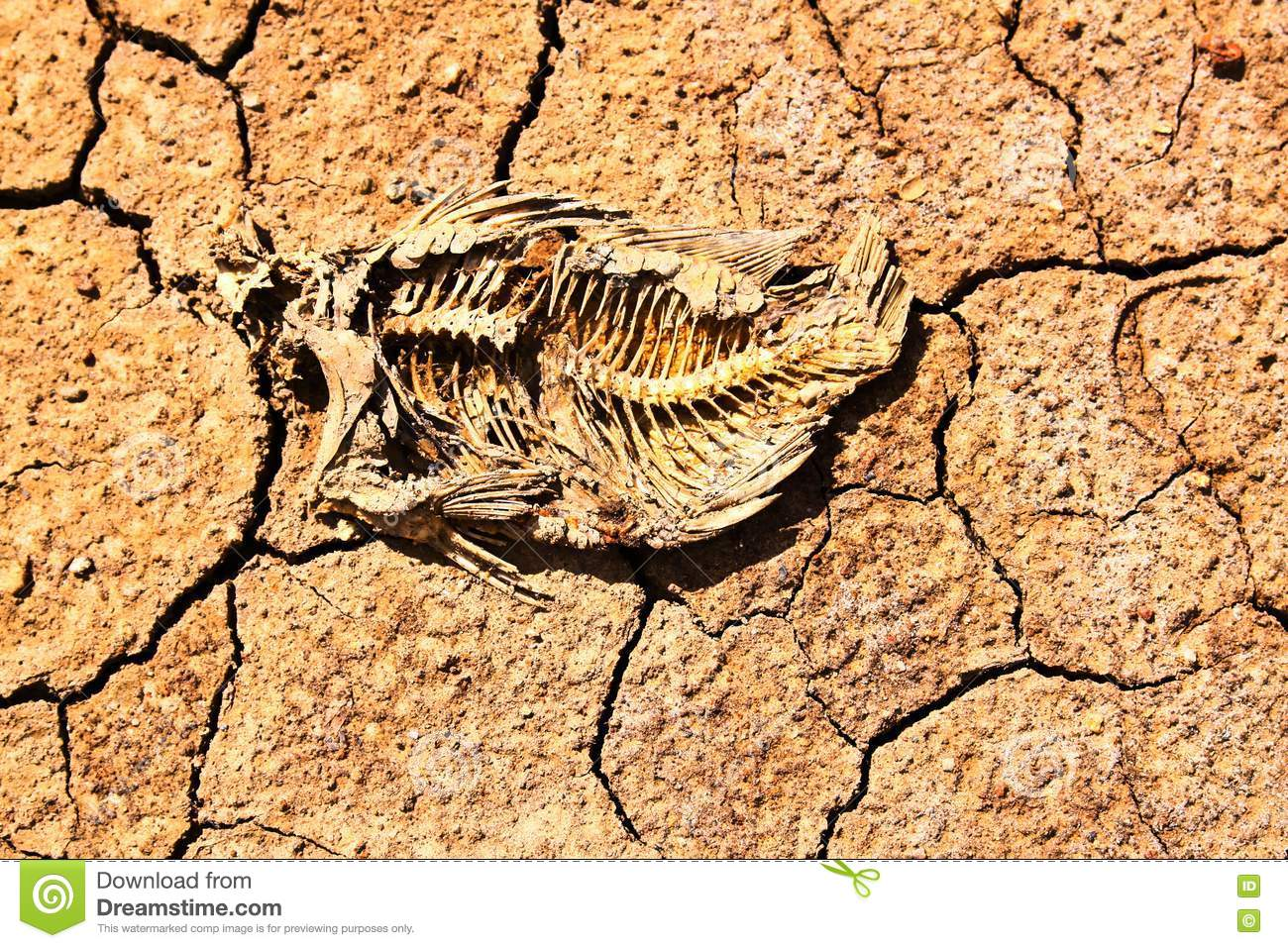 Fish die on the soil royalty free stock photo image for Soil 7 days to die