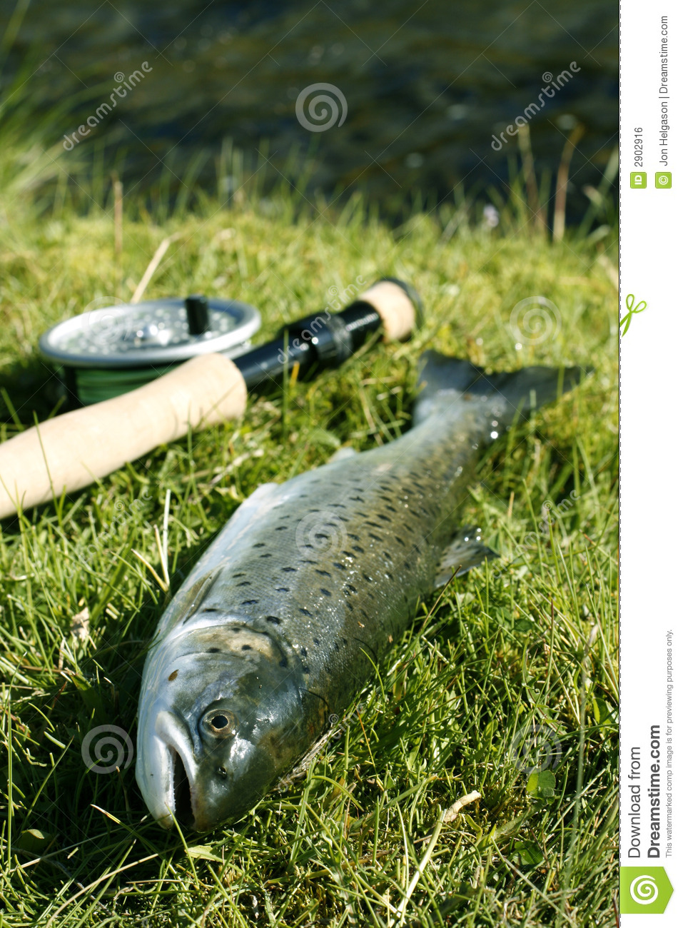 Fish on dry land stock photo image of natural hobby for Dry land fish