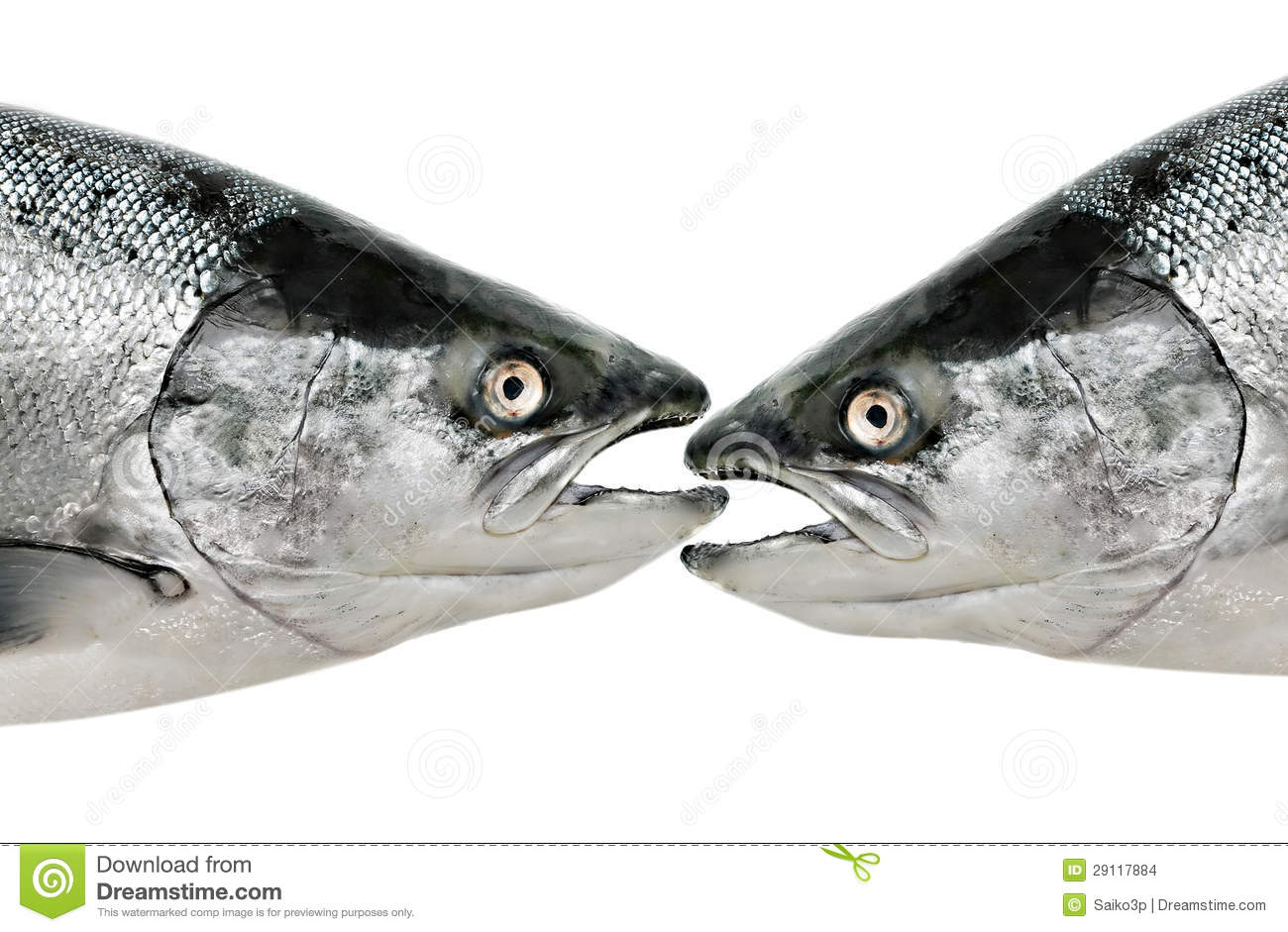 Fish eat fish close up isolated stock images image 29117884 for Fish that eat other fish