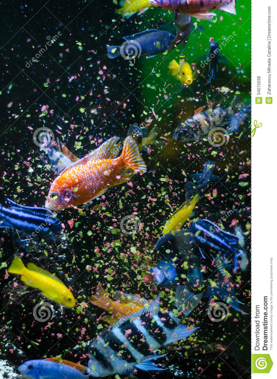 Fish eating flakes food stock photo image of tank water for Dreaming of eating fish