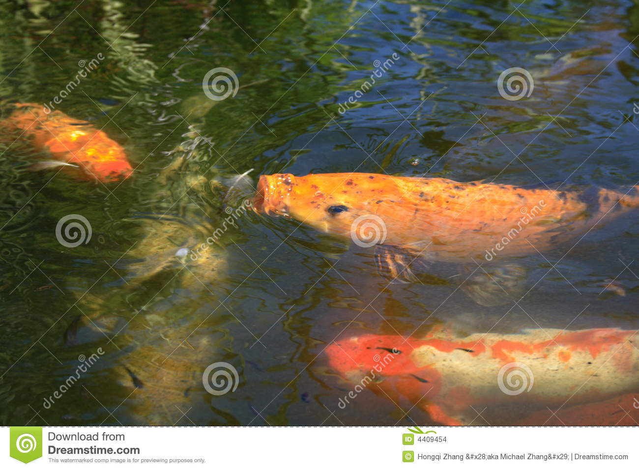 Fish Eating Insects Stock Images Image 4409454