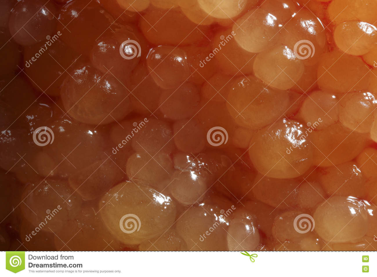 Fish eggs from pike fish stock image. Image of fish, color - 80858231
