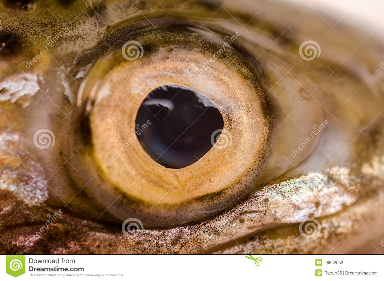 Fish eye stock photography image 28602952 for Fish eye skin