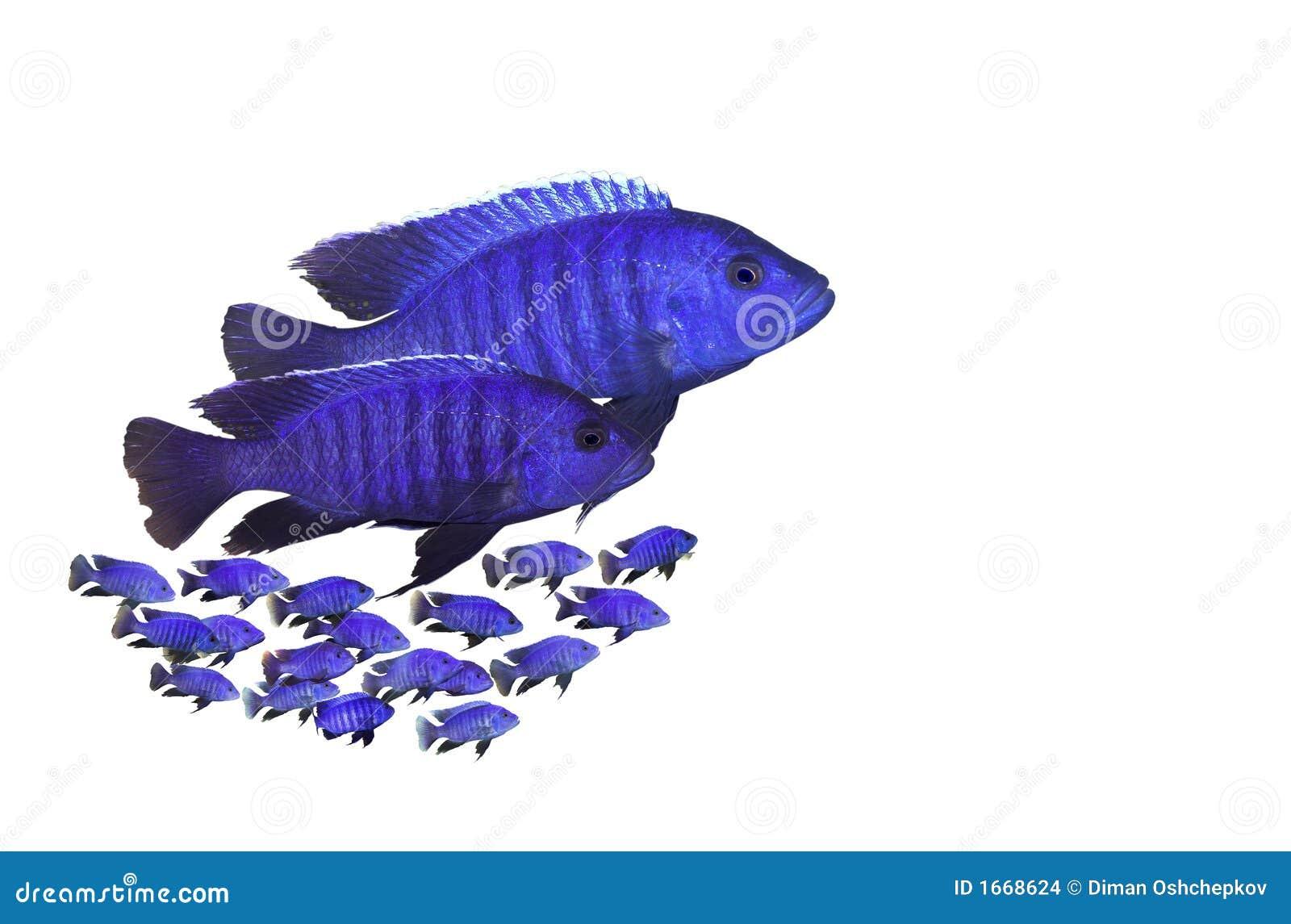 aquarium bilder kostenlos