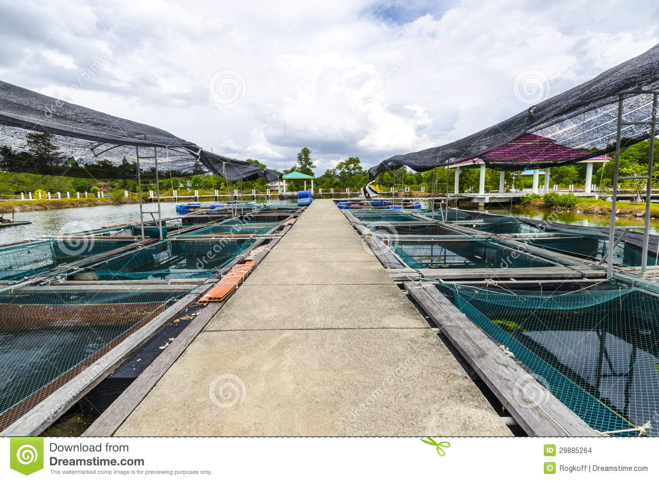 Fish farm in the pond. Krabi South Thailand.