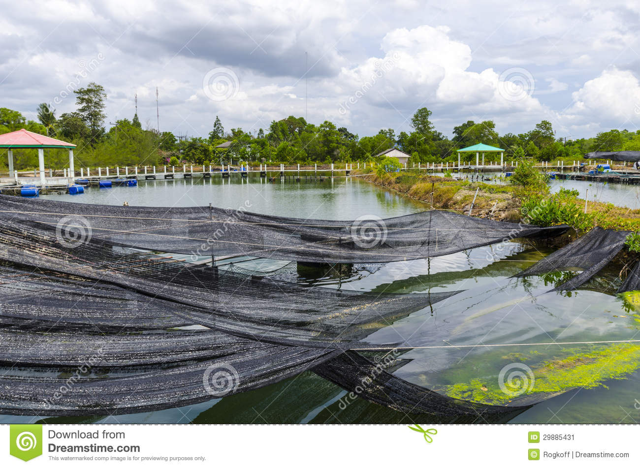 Fish Farm In The Pond Stock Image Image 29885431