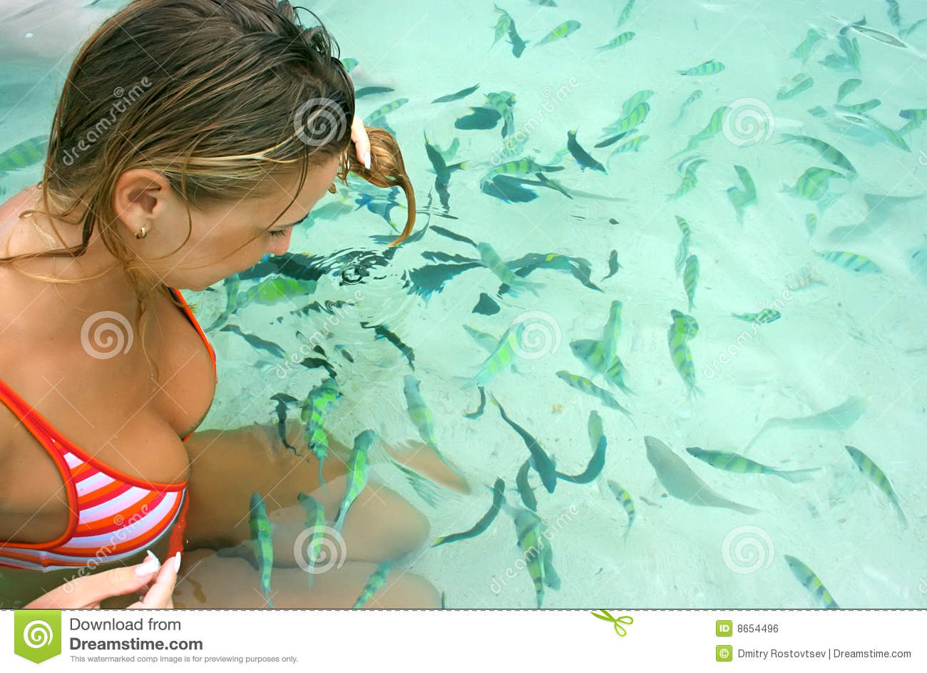 Fish feeding royalty free stock image image 8654496 for How to feed fish