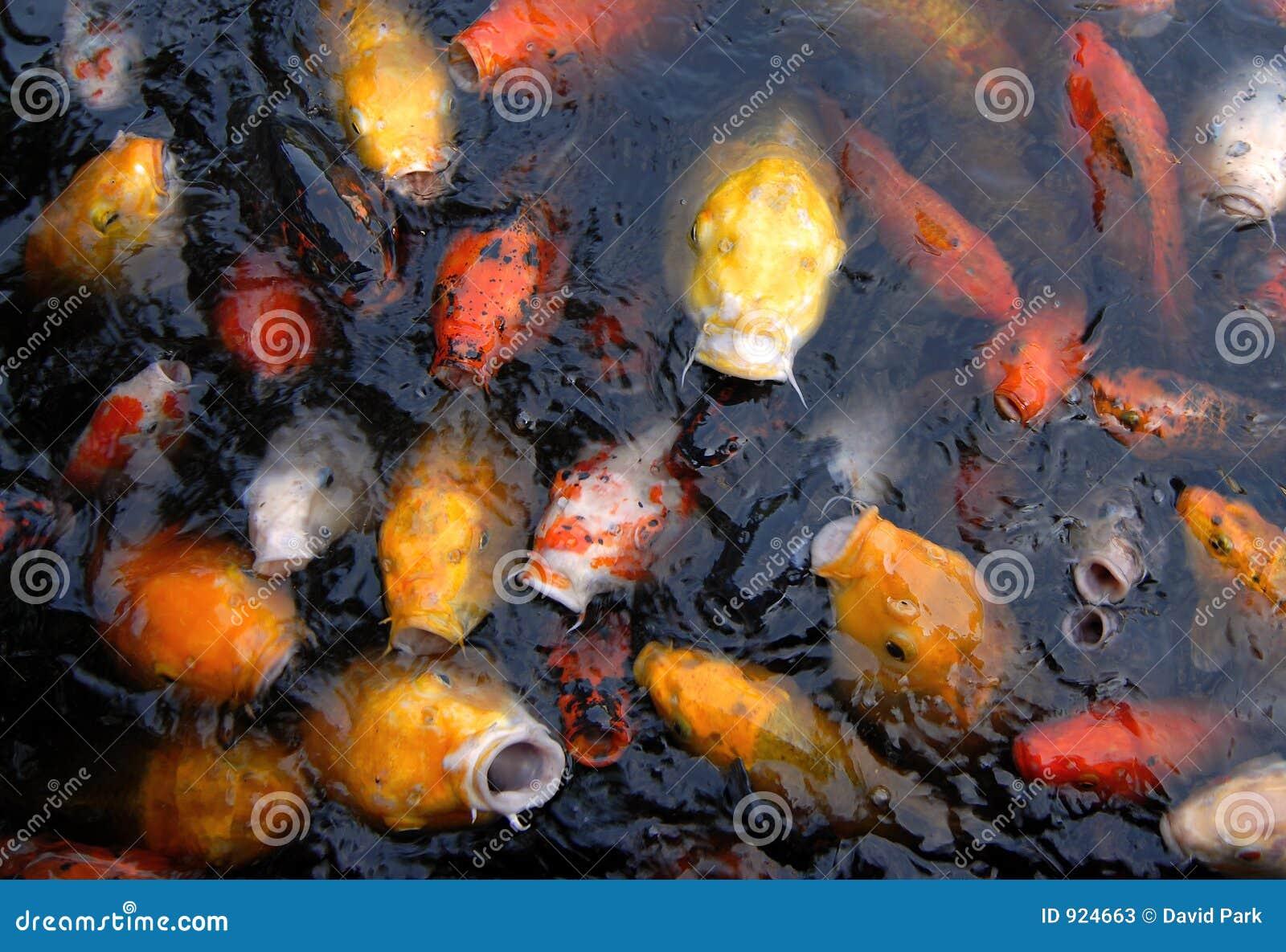 Fish feeding frenzy stock photos image 924663 for Feeding frenzy fish