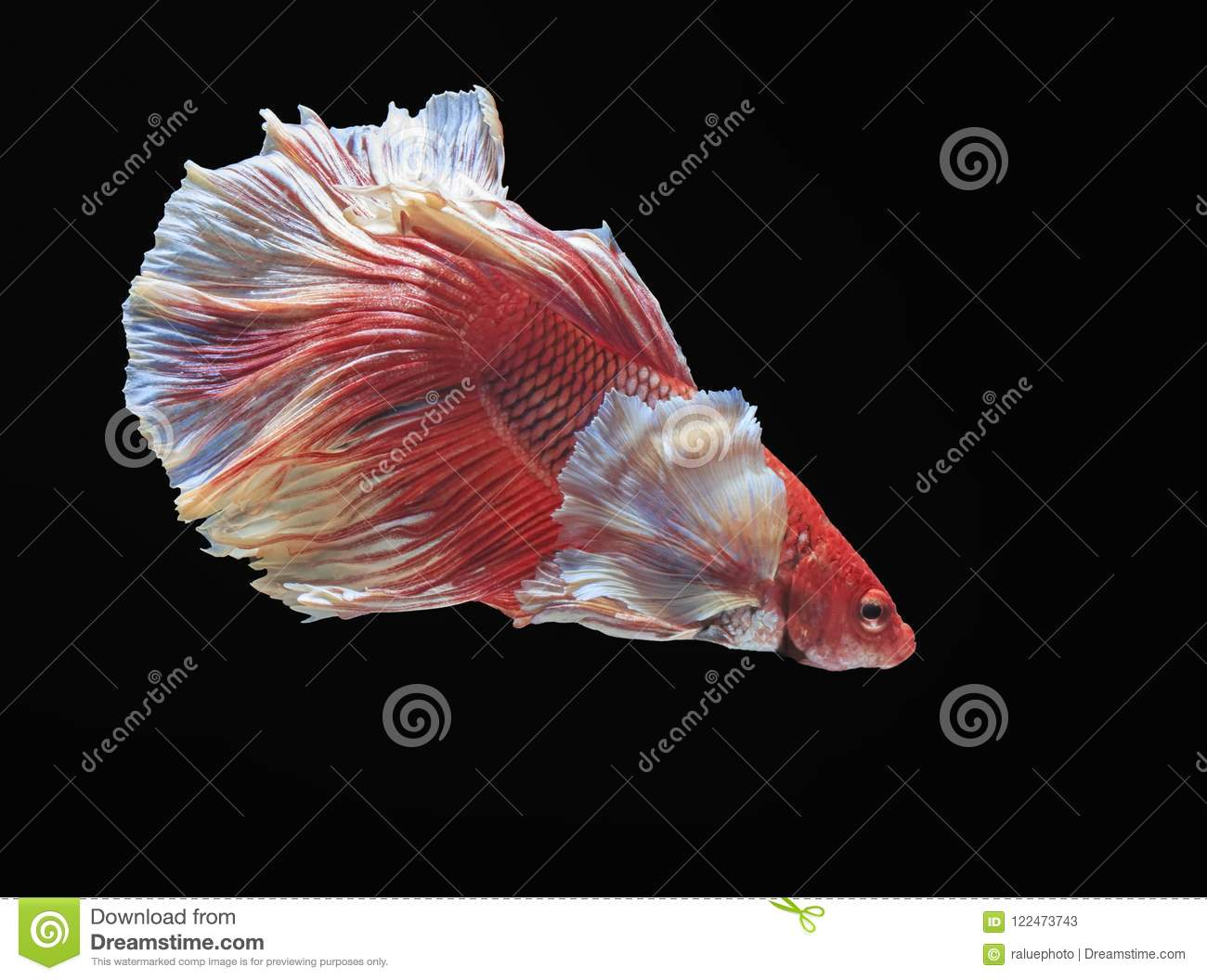 Dorable Fish Colorful Ensign - Drawing Coloring - androidharga.info