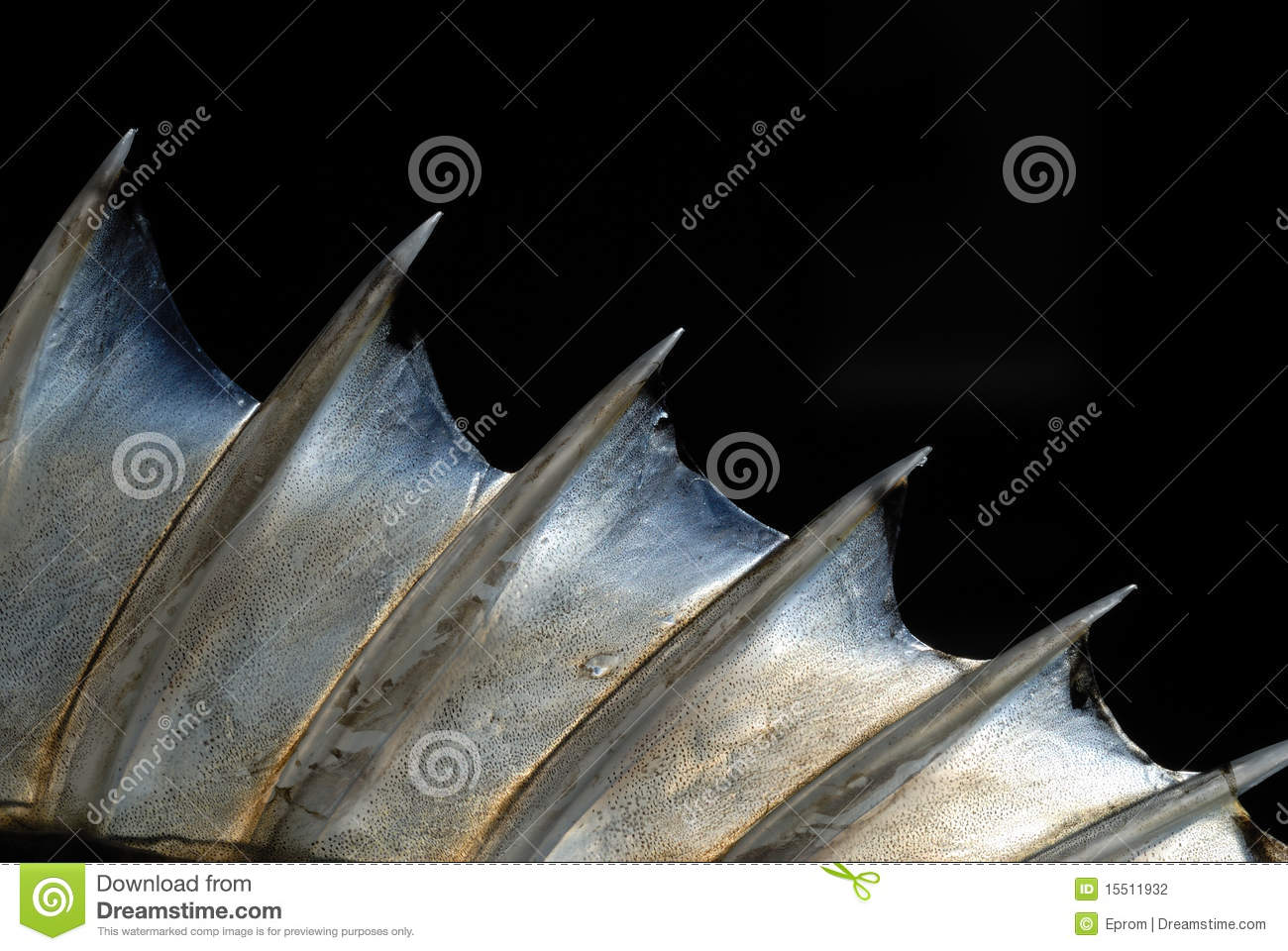 fish fin stock photography image 15511932 fungi clipart black and white fungi clipart black and white